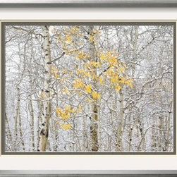 Artcom - Fall Birch by Andrew Geiger - Fall Birch by Andrew Geiger is a Framed Photographic Print set with a EASTMAN Gray Thin wood frame and Crisp - Bright White, Vanilla, Charcoal matting.