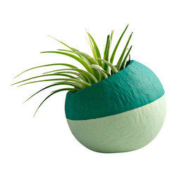Mini Air Plant Teal Ombre Colorblock Pod // Air Plant Pot - These air plant pods are natural pods that have been hand painted and re-purposed into a planter so each pod is unique and organic in size/shape. These natural vessels make great displays for air plants. The plant pods would look great displayed along a shelf, desk, or window sill.