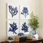Framed Coral Prints, Indigo -