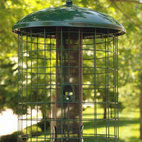 Woodlink - Caged Squirrel Resistant Mesh Screen Fdr - This metal gridwork cage effectively keeps adult squirrels out of feeder. Also helps to keep larger birds out of feeder. Comes fully assembled and holds a variety of seed. Easy to fill and clean.