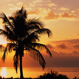 Murals Your Way - Coconut Palms At Sunrise, Sanibel Island Causeway, Florida Wall Art - Photographed by Danny Burk, the Coconut Palms at Sunrise, Sanibel Island Causeway, Florida wall mural from Murals Your Way will add a distinctive