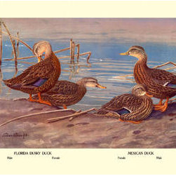 Buyenlarge - Florida Dusty and Mexican Ducks 28x42 Giclee on Canvas - Series: Birds - Ducks