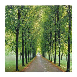 Oriental Furniture - Path of Life Canvas Wall Art - Sharp, vibrant print of a tree-lined avenue during the greenest, brightest days of summer. Vanishing focal point gives this print depth and movement. High quality photograph reproduced with digital ink jet print technology onto primed art canvas.