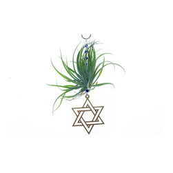 Spirit Pieces - Living Star of David Ornament - A lovely addition to any inside or outside local, this Tillandsia air plant has blue and clear beading with a laser cut Star of David and crystal butterfly top-piece.  This is the perfect ornament for anyone who likes plants and Judea decor.  Hang it in the kitchen window, door threshold, or off an awning.  Water once a week.  Makes a perfect gift.