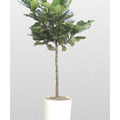 traditional plants by baerplantworks.com