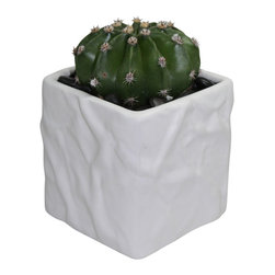 "MODgreen - Echinopsis o. - 4"" Ceramic Potted Cactus and Succulents - This plant native from South American is most commonly known as ""Easter lily"" cactus. Water once a month and place under bright light. With this design MODgreen has put a new twist to the standard ceramic cube planter by giving them a corrugated texture that make these beautiful pots stand out above the rest."