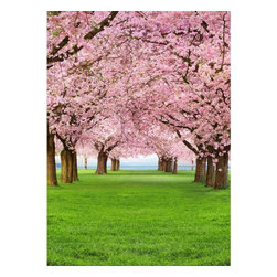 Cherry Trees Wall Mural - A fresh wall mural with a delightful scenic of cherry trees in bloom makes a beautiful statement in any space. The photorealistic quality of this mural has a trompe l'oeil effect as if your walls had opened up to reveal a heavenly snapshot of Spring bliss.