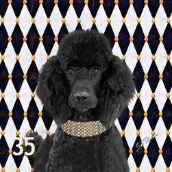 POPPA ARTZEE - Black Poodle Dog Poodle - Adorable dog paintings silk screened onto Pillows with vibrantly colored backgrounds.  These playful paintings are created by Scottsdale artist, Sal Romano.  Pillow Cover fabric is a durable finely woven washable polyester canvas with animal image on one side and solid black back with zipper and black piping all around.  Pillow insert is filled with polyester cluster fiber.
