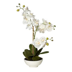 """Lamps Plus - Double White Silk Orchid Flower in Pot - This beautiful silk orchid flower arrangement is realistic and graceful with white petals and deep green leaves. In contemporary style, a simple white ceramic pot sits at the bottom, giving the illusion of a real potted plant. Bring the grace and elegance of orchids to your home decor without the watering and care needs. Silk orchid arrangement. White flowers. In ceramic pot. 25 1/4"""" high. 12"""" wide. Pot is 7"""" wide."""
