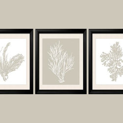 Revere Pewter Coral Prints - Three 8x10 archival quality prints of antique sea coral, seaweed and sea kelp. Two of the prints are light warm grey on white background, and one print is a white coral silhouette on a matching Revere Pewter gray background.