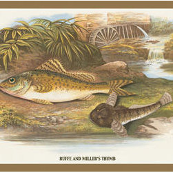 Buyenlarge - Ruffe and Millers Thumb 12x18 Giclee on canvas - Series: Fish & Fishing
