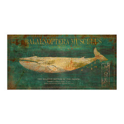 Balaenoptera Musculus Crackle Giclee - Twice as long as it is tall, the Balaenoptera Musculus Crackle Giclee is tailor-made to hang over a highboy or above a small townhouse hearth. An emerald backdrop, vintage lettering, and an unconventional take on its subject, reversing the hue balance of the marine naturalist's illustration, complete the appeal of this artful distressed whale print.