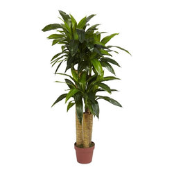"""Nearly Natural - 4 ft. Corn Stalk Dracaena Silk Plant - Real T - Features """"Real to the touch"""" feel. Thick, accurately designed trunks. Featherlike leaves spill out at various layers. Construction Material: Polyester material, Iron wire, Plastic. 24 in. W x 24 in. D x 48 in. H ( 10 lbs. ). Pot Size: 6.75 in. W x 5.75 in.HFor those who enjoy touching in addition to visual admiration, we have our four foot high Dracaena Silk Plant. """"Real to the touch"""" it'll fool both senses to create a very realistic illusion. Supported with thick, accurately designed trunks, the dense plumage of featherlike leaves spill out at various layers to create an interesting multi level design. Comes with worry free maintenance, thus keeping it green all year long."""