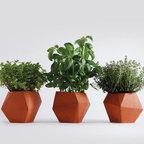 Herb by Nick Fraser -