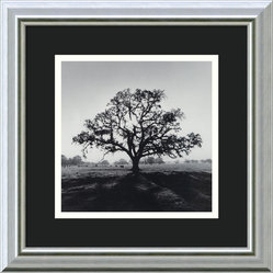 """Oak Tree, Sunrise, Northern California, 1966"" Framed Print by Ansel Adams"