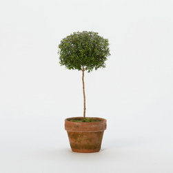 Myrtle Topiary, Small - When in doubt, add a little greenery.