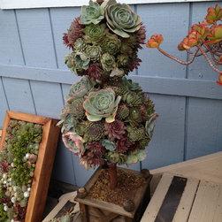 Succulent Creations - Metta Landscapes