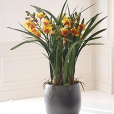Traditional Plants by Winward Designs