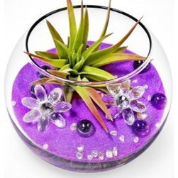 """luludi living frames - Luludi Living Frames Oopsy Daisy - Brighten someone""""s day with our oopsy daisy terrarium featuring decorative glass daisies nestled among colored stones and pebbles with an air plant atop byzantine purple sand in a soirees glass bowl, dimensions: 3"""" diameter, weight (approx): 12 oz, terrariums are unique landscapes so finished pieces may vary, Suggestion for care:, no direct sun required, mist once per week remove air plant first, mist and allow to dry before replacing in terrarium, upon receipt soak air plant in bowl of water for 30 minutes, allow to dry then place plant in terrarium, our soirees terrariums are living compliments to any event as table setting decor, unique name card holders and as party gifts. Consider customizing your soirees with any color sand, plant and decorative element just email or call us to discuss your design ideas"""