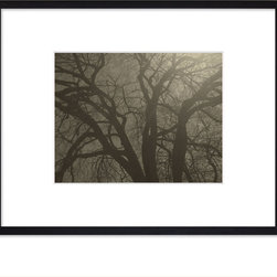 """Hip Pictures - """"Spring Oak #2"""" - 11x14 - Eco-Friendly Black Rubberwood Frame - Taking some creative license with the processing of this photo... it was actually shot during early day light and beaming sunshine through the web of branches. The tree had just started to bud and is the subject of a multiple images found on HipPictures.com."""