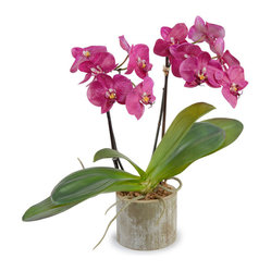Phalaenopsis Double Orchid Arrangement