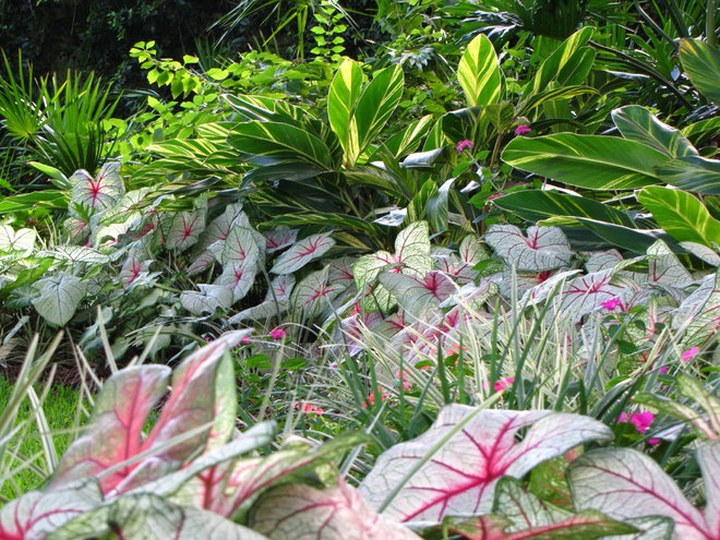 Brighten Shady Gardens with Tropical Plants
