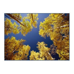 Concord National Geographic Photographic Rugs - Sky through Trees