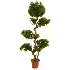 Traditional Plants by Beyond Stores