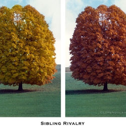 Sibling Rivalry, Limited Edition, Photograph - Anything you can do, I can do redder.  Specs: CAPTION IS PART OF PRINTED PIECE. Signed and Numbered. Edition limited to 100. Printed on acid-free archival paper. Ship all pieces rolled in heavy-duty shipping tube, insured.