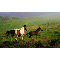 """Biggies, Incorporated - Wall Mural - Mare and Foal - Mare and Foal Wall Mural! Decorate instantly with strong visual impact. Create a gorgeous scenic backdrop with the largest one-piece wall mural on the market. No strips, no paste, no mess. 54"""" x 26.75"""""""