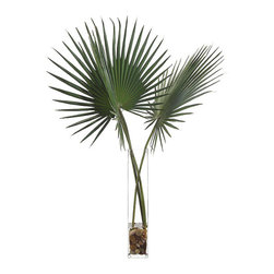 """Frontgate - Delta Palmettos Botanical Arrangement - Polyester silk leaves. Clear glass vase. Filled natural stones in acrylic """"water"""". Imported. Our natural-looking Delta Palmettos Botanical Arrangement highlights a pair of elegant faux palm branches that replicate those commonly found in the Atlantic and Gulf Coastal regions of the United States. Just over 4 feet tall, these fan-like leaves emanate from a clear glass vase. . . . ."""