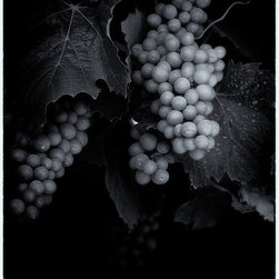 Lush by Robert S. Sfeir - Grapes in black and white. About $650 for a 32 x 24 inch piece. Available in other sizes. Visit http://www.printedart.com for more info.