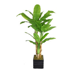 Laura Ashley - 78 in. Banana Tree with Real Touch Leaves Fiberstone Planter - Beautiful lifelike Banana tree with Real Touch leaves in a Fiberstone planter. No need to shop for a planter separately - comes complete with decorative planter. Artificial plants let you decorate without concern for water damage, trimming, or soil.. 48 in. L x 48 in. W x 78 in. H (20.6 lbs.)