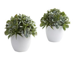 Covered In Style Inc - Mixed Succulent w/White Planter (Set of 2) - Succulents are known the world over for their pretty shapes and varied textures. This arrangement really brings those qualities out front and center. The leafy greens explode forth from the included white planter, ensuring you never see the same shape twice. best of all, this is a set of two, so your decorating options double. Ideal for any home décor, or office reception area. Makes a fine gift, too.
