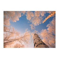 Oriental Furniture - Treetops in Daylight Canvas Wall Art - Elegant white Aspens haloed with ice and lit from off-frame by the winter sun, photographed from an unusual perspective. A crisp, clear image in soft white, blue and gold hues. Printed on durable canvas and stretched across a mitered wood frame. A great hanging art print with a touch of warm yellow for home or office decor that features cool hues.