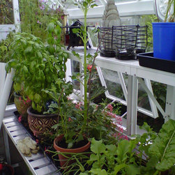 small English greenhouses / glasshouses - Victorian greenhouses / glasshouses - herbs & veggies started from seed growing in unheated Hartley Victorian Planthouse 8.5' x 10.5'