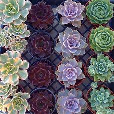 Eclectic Indoor Pots And Planters by Succulentsplus