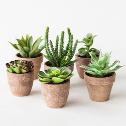 Green Thumb Succulents - Set of 6 - Not only will these affordable and realistic potted succulents be perfect centerpieces for a garden-inspired wedding, but they're perfect favors for guests to take home.