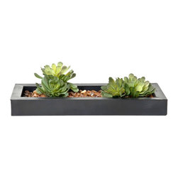 Creative Branch - succulents in zinc - Quality Product