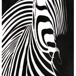 "Yosemite Home Decor - Yosemite Home Decor FC3039-1 Wild life I Hand Painted Contemporary Artwork - Wild Life I is a hand painted artwork that shows the distinct profile of an African Zebra. The painting makes use of a delicate mix of black and white to emphasize the profile of the animal. Wild Life has a composition that makes it resemble a photo. It is a painting that boasts of culture and a knowledge of the world. Completely hand-painted acrylic on canvas, signed by skilled artisans bringing value and originality that cannot be replicated in a print. Exclusively pre-wired, gallery wrapped around 1"" wooden stretcher bars. Ready for display or for decorative framing. Extra attention to detail with the use of various types of medium such as leafing, MDF, metallics and/or embellishments Part of the dramatic ""Unveiled: The Contemporary Collection"" featuring unsurpassed quality and incomparable style."