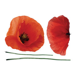 "Home Decor - Poppies Wall Decals - This large poppies wall graphic is big bold and beautiful. Large red and ready to apply these poppies will stand out on your wall and add a sense of class and natural style to your home. Apply these to your wall today for a splash of much needed color. This wall decal comes on a 27.56"" x 39.37"" sheet. Imported from Italy"