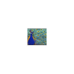 Caroline's Treasures - Bird - Peacock Indoor or Outdoor Mat 24 x 36 Doormat - Indoor / Outdoor Mat 24 x 36 - 24 inches by 36 inches. Permanently dyed and fade resistant. Great for the front door or the back door. Use this mat inside or outside. Use a garden hose or power washer to chase the dirt off of the mat. Do not scrub with a brush. Use the Vacuum on floor setting. Made in the USA. Clean stain with a cleaner that does not produce suds.