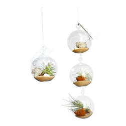 Air Plant Company - 2 Airplant Terrariums - Airplants also known as Tillandsia is a genus of around 540 species of evergreen, perennial flowering plant. Native to the forests, mountains and deserts of Central and South America, the southern United States and the West Indies.