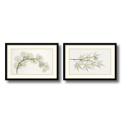Amanti Art - Eucalyptus and Japanese Maple - Set by Albert Koetsier - The delicate veins of these leaves are exposed to reveal an intricate natural architecture in this x-ray photo by Albert Koetsier.