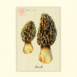 Studio1022 - Morel Mushroom Print, 11 X 14 - Morel Mushroom. Elegant rendering of a popular vegetable. Archival prints from original illustrations and paintings by Rich Lo. Hand signed