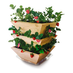 Architec Housewares™ - Homegrown Gourmet Products™ Strawberry Patch Tower - Stackable Design allows up to 28 strawberry plants to grow vertically in an ideal environment. Saucer included for indoor use. Natural Cedar Wood. Made in USA!