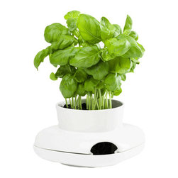 Small Herb Pot - Create a lush indoor garden with elegant design. This ceramic pot is perfect for a small herb plant and includes a side opening to easily fill the design's reservoir. Save some time, as water stored in the reservoir will continually nurture the plant.