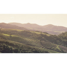 Vineyard in a Valley, Sonom, Sonoma County, California, USA Wall Decal at Art.co