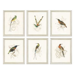 Paragon Art - Paragon Hummingbirds ,Set of 6 - Artwork - Hummingbirds ,Set of 6         ,  Paragon Artist is Jardine , Paragon has some of the finest designers in the home accessory industry. From industry veterans with an intimate knowledge of design, to new talent with an eye for the cutting edge, Paragon is poised to elevate wall decor to a new level of style.