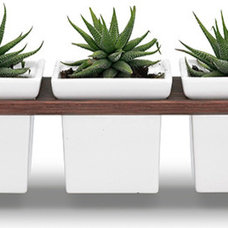 Modern Indoor Pots And Planters by HORNE
